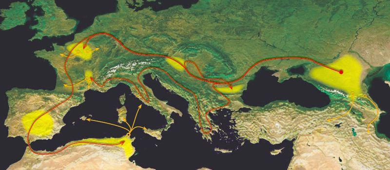 n1a Migration Pattern