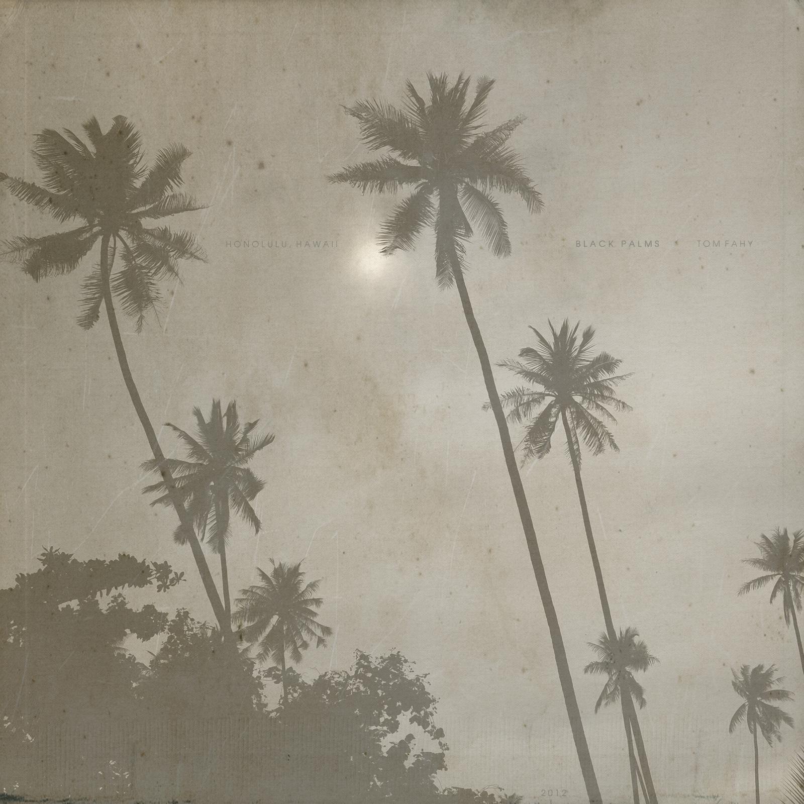 Black Palms by Tom Fahy